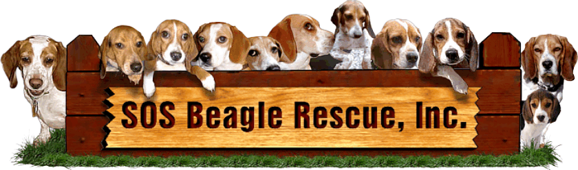 SOS Beagle Rescue